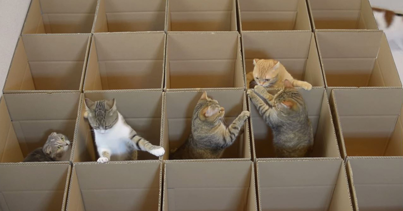 cats-and-boxes-video