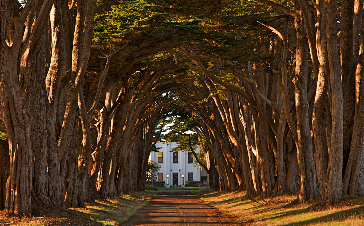 cypress tree avenue kph point reyes california Picture of the Day: Cypress Tree Avenue   Point Reyes, California