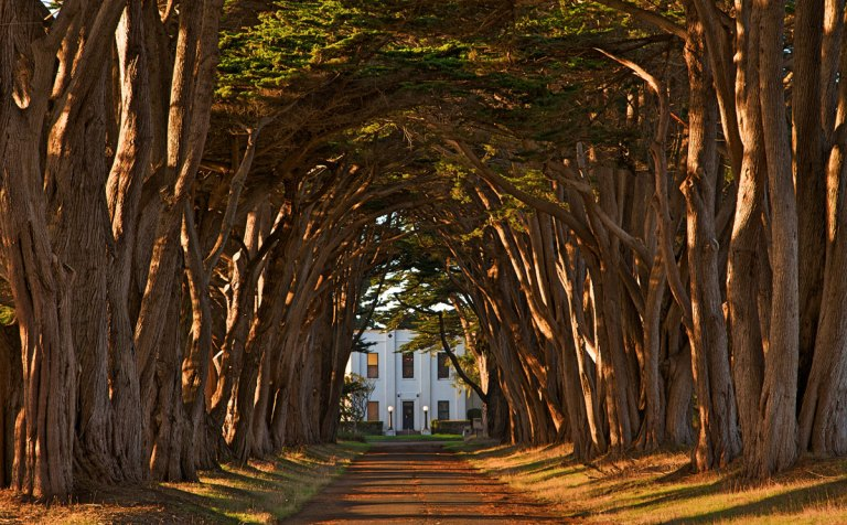 Cypress Tree Avenue – Point Reyes, California