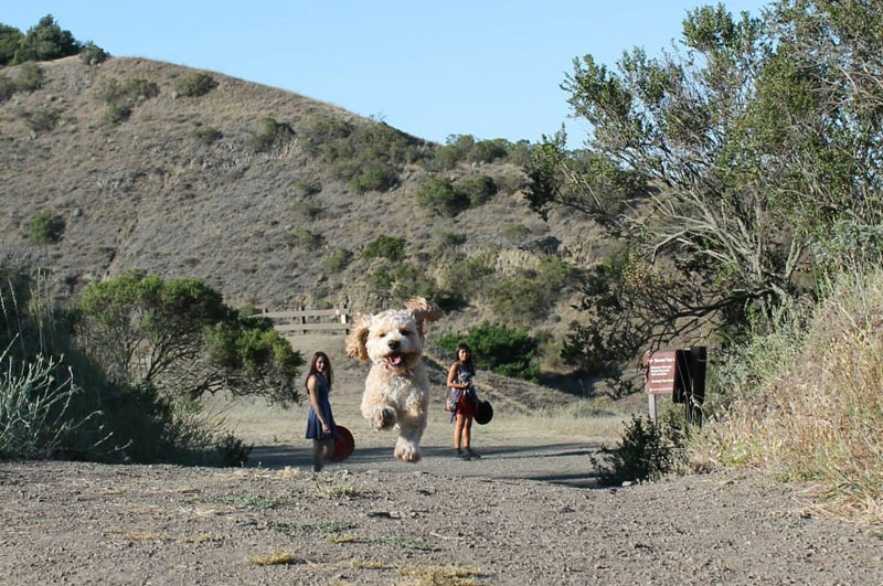 Picture of the Day: Forced Perspective or World's BiggestDog?