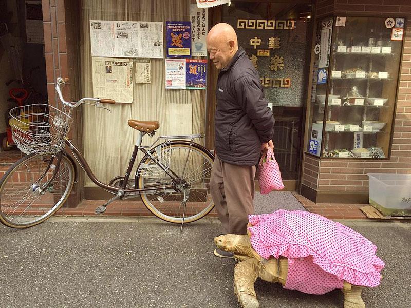 mitani hisao wakls his tortoise around tokyo (2)