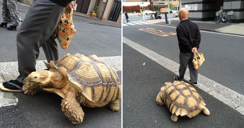 Guy Walks His Pet Tortoise Around the Streets of Tokyo