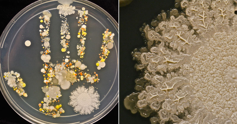 Microbiologist Takes Handprint of Her Son After Playing Outside and Incubates the Results