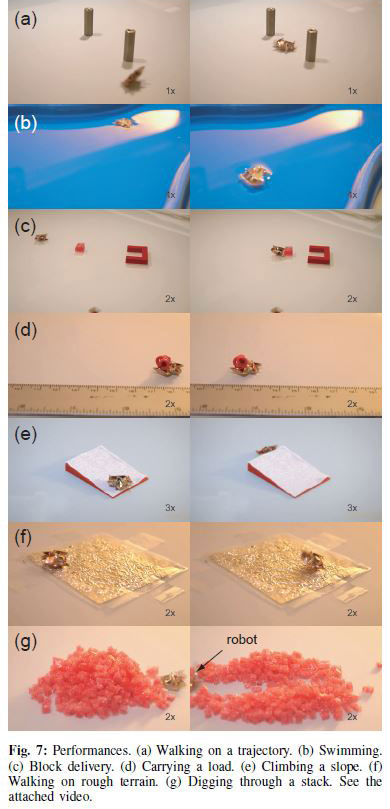 Tiny Self-Folding Origami Robot Can Walk Swim and Degrade (3)