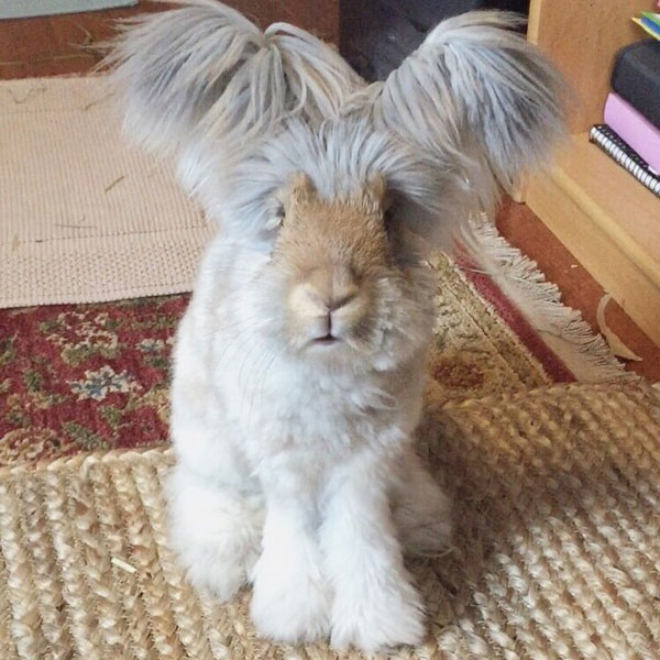 Wally The Bunny Rabbit Instagram Best Ears Ever 1