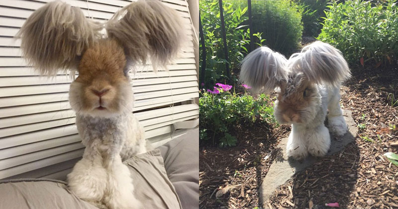 Wally the Rabbit has the Best Ears Ever (10 Photos)