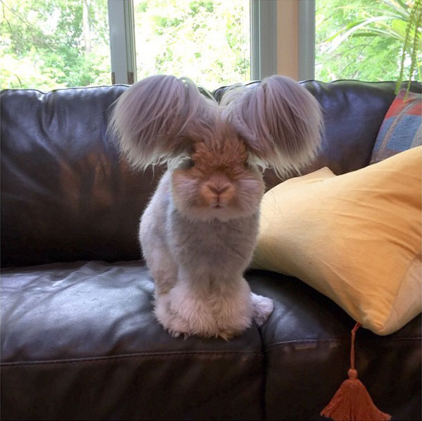 wally the bunny rabbit instagram best ears ever (2)