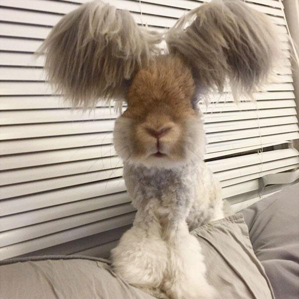 wally the bunny rabbit instagram best ears ever (9)