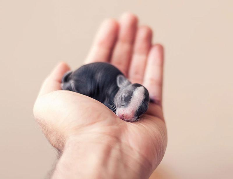 ashraful arefin captures first 30 days of bunnys life (1)
