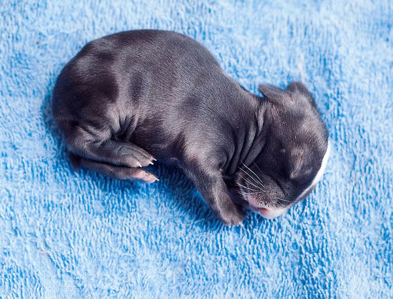 ashraful arefin captures first 30 days of bunnys life (2)
