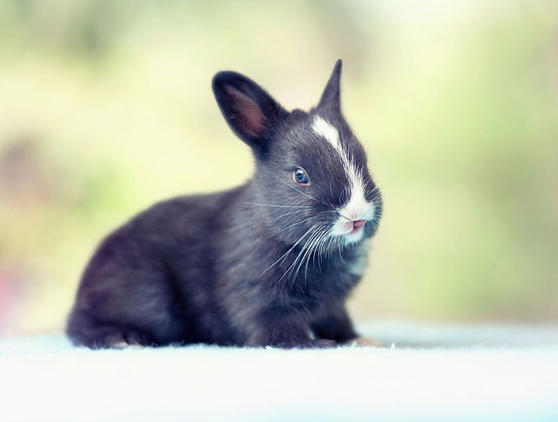 Photographer Captures the First 30 Days of a Bunny's Life