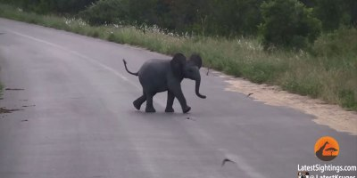 Baby Elephant Adorably Chases Birds Flying AroundHim