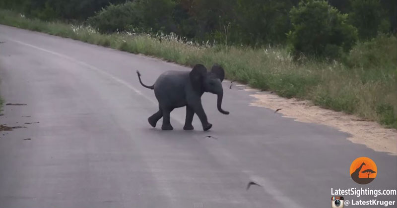 Baby-Elephant-Adorably-Chases-Birds-Flying-Around-Him
