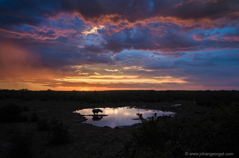 black rhino at the watering hole johan georget Picture of the Day: Black Rhino at the Watering Hole
