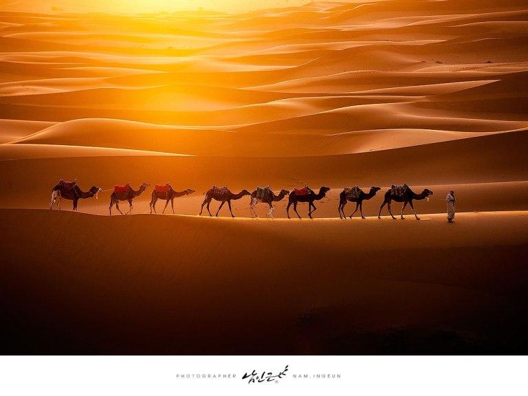 Camels Crossing the Sahara