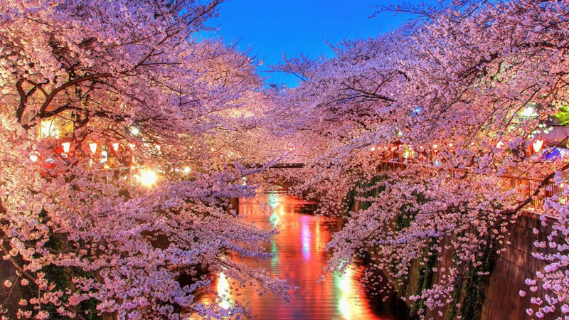 cherry blossoms in japan The Top 100 Pictures of the Day for 2015
