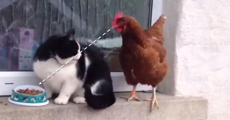 This Chicken Will Not BeDenied