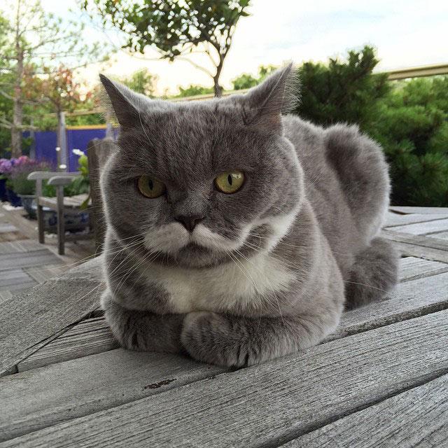 citronnelle the cat instagram (1)