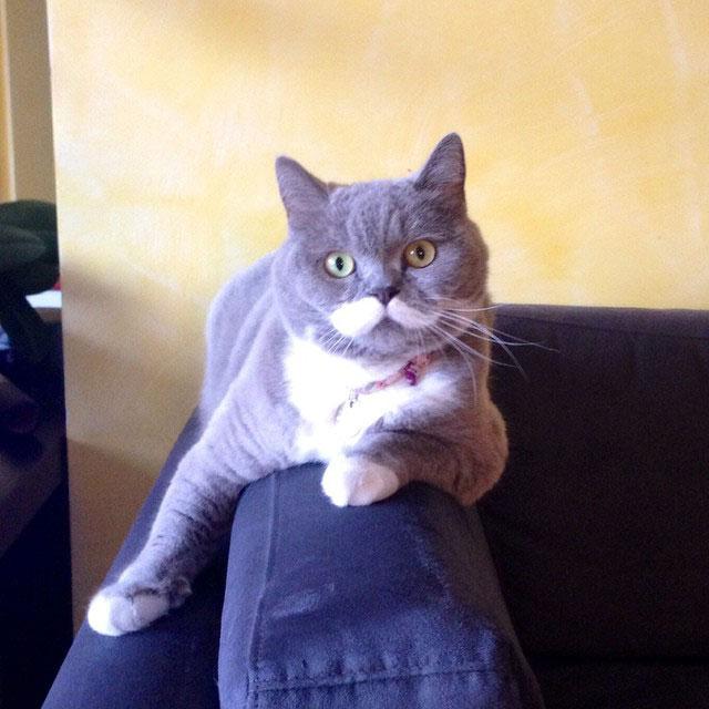 citronnelle the cat instagram (6)
