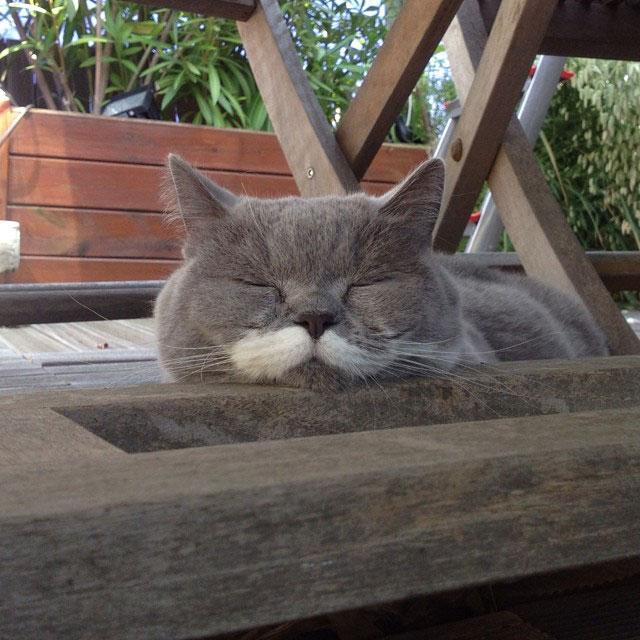 citronnelle the cat instagram (9)