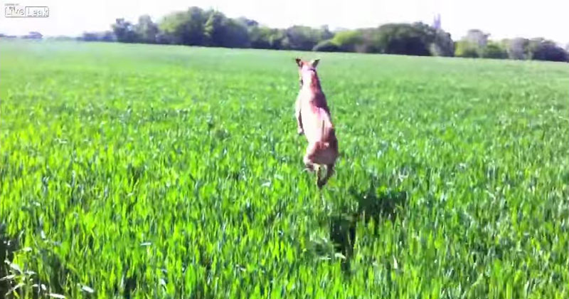 This Dog Jumping Through a Field Will Make You Smile