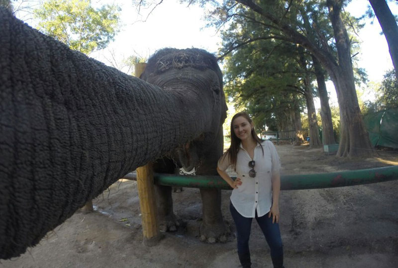 elephant selfie The Shirk Report   Volume 328