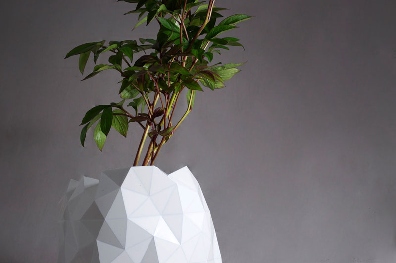 flower pot grows as plant does growth by studio ayaskan (1)