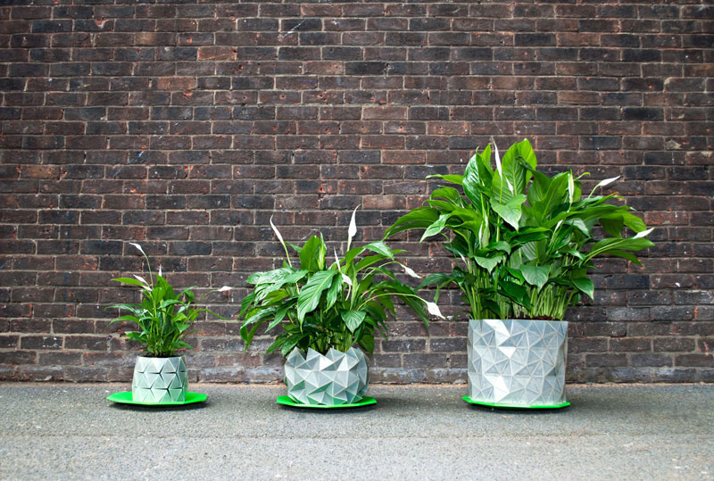 flower pot grows as plant does growth by studio ayaskan (2)