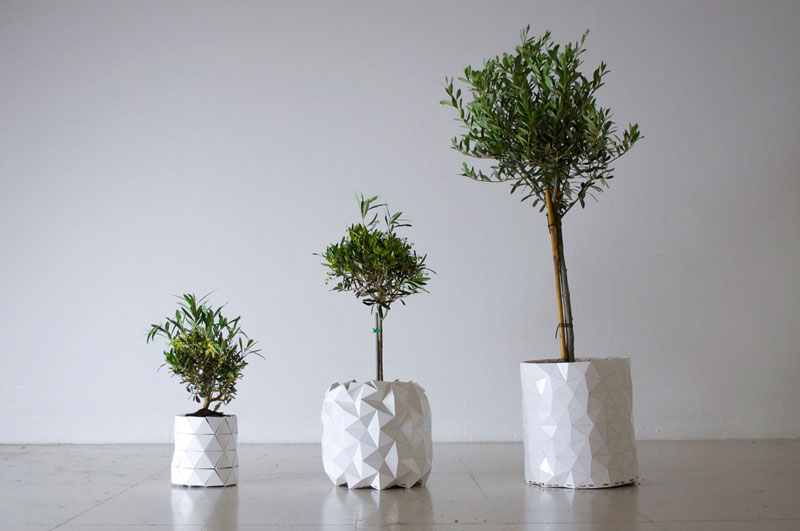 flower pot grows as plant does growth by studio ayaskan (3)