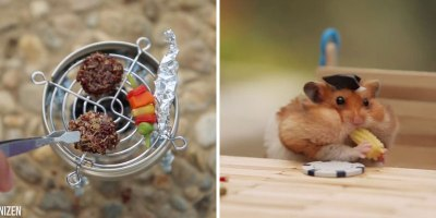 Tiny Hamster Has Tiny Fourth of JulyBBQ