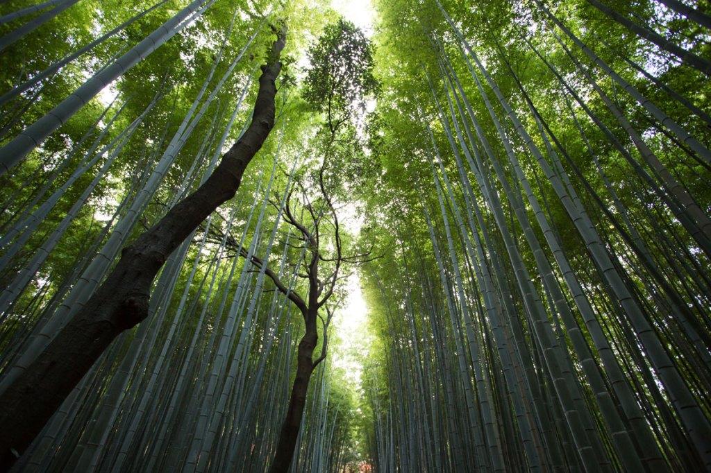 Picture of the Day: Arashiyama Bamboo Grove, Kyoto,Japan