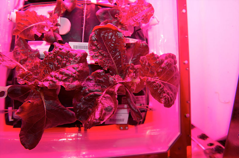 astronauts on iss eat veggies grown in space (1)
