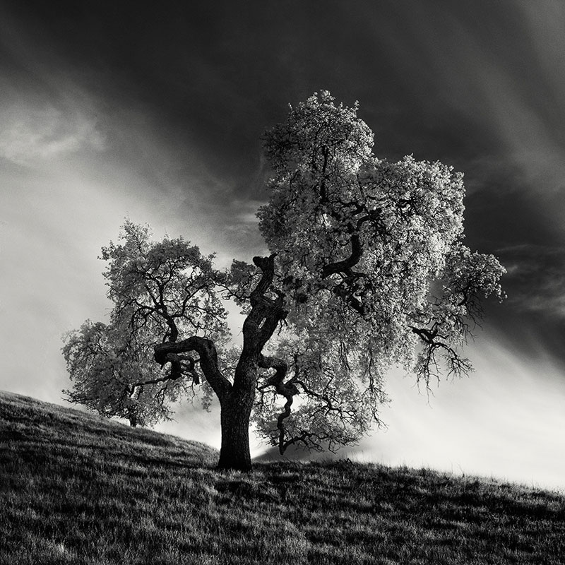 california trees infrared photography by nathan wirth  (1)