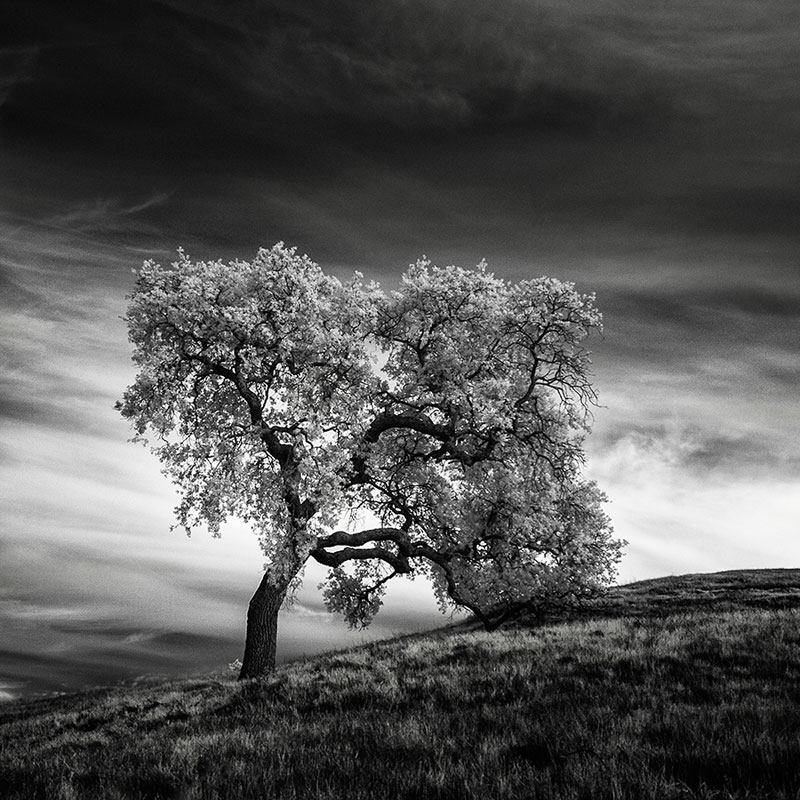 california trees infrared photography by nathan wirth  (4)
