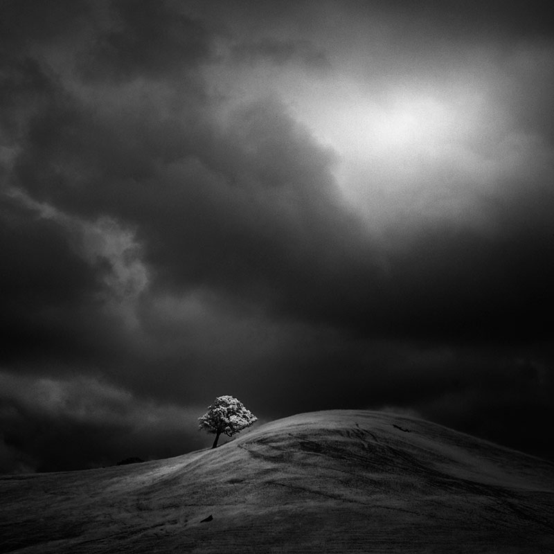 california trees infrared photography by nathan wirth  (5)