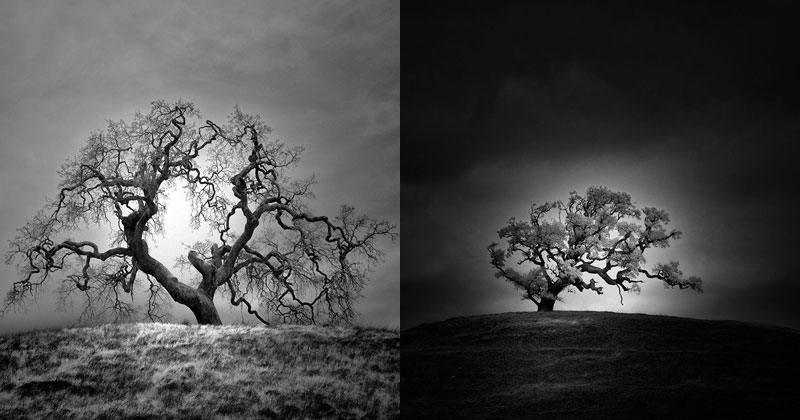 The Solitary Trees of Northern California in Infrared