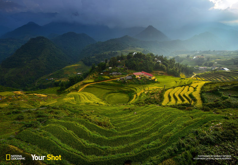 rice terrace vietnam