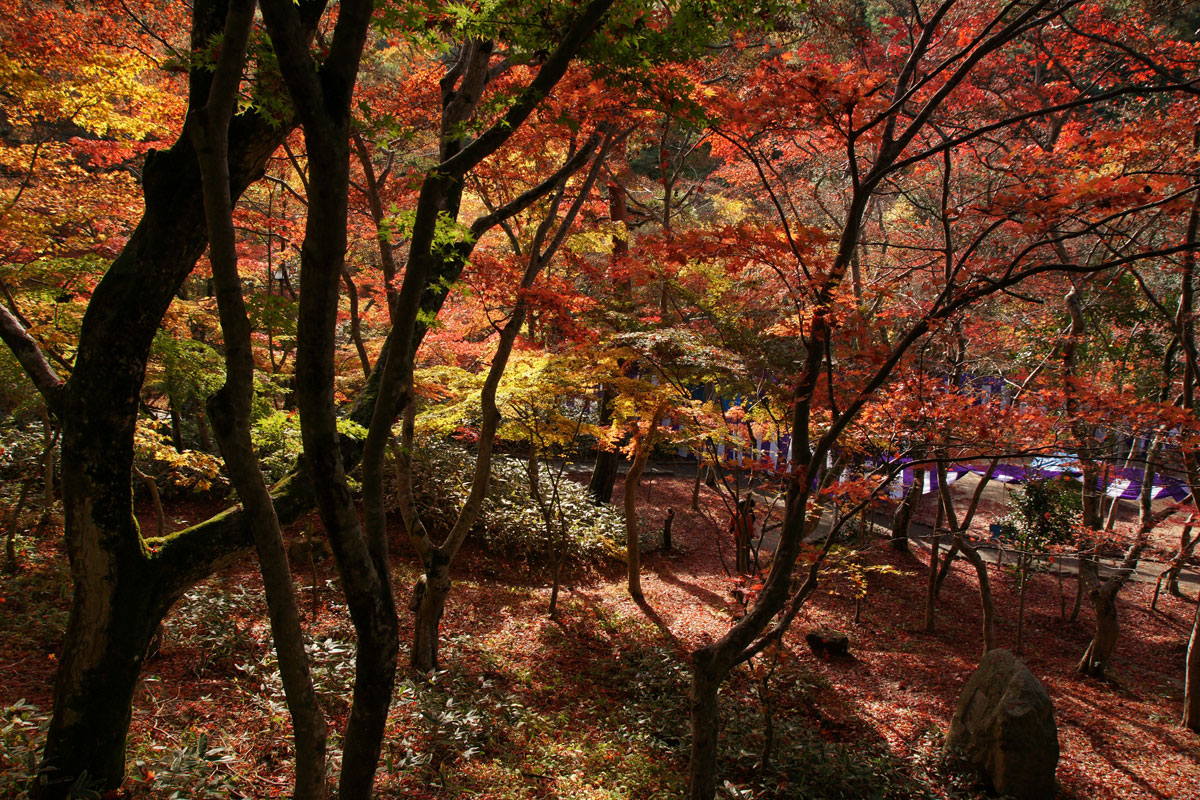 autumn-in-kobe-japan-Zuihoji_park