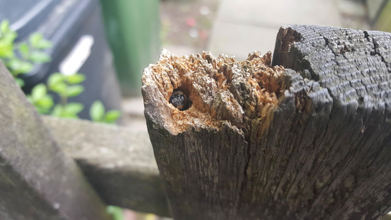 carpenter bee in fence post home hole Picture of the Day: Home Sweet Home