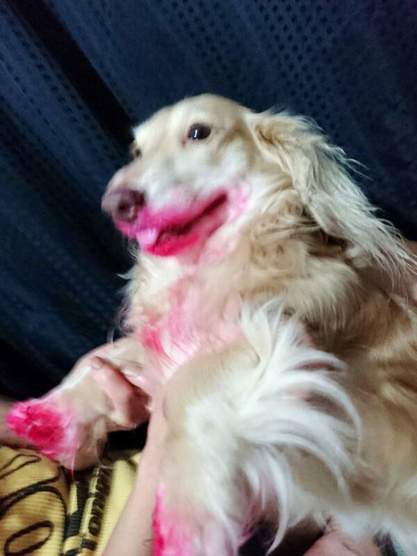 dog eats lipstick (2)