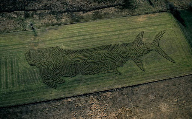 land crop art by stan herd (2)