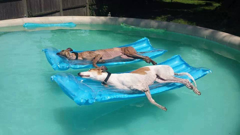 retired greyhounds up for adoption atlanta Picture of the Day: Athletes in Retirement