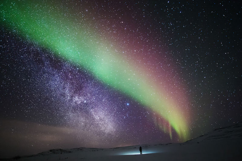 Lone Wanderer in the Arctic