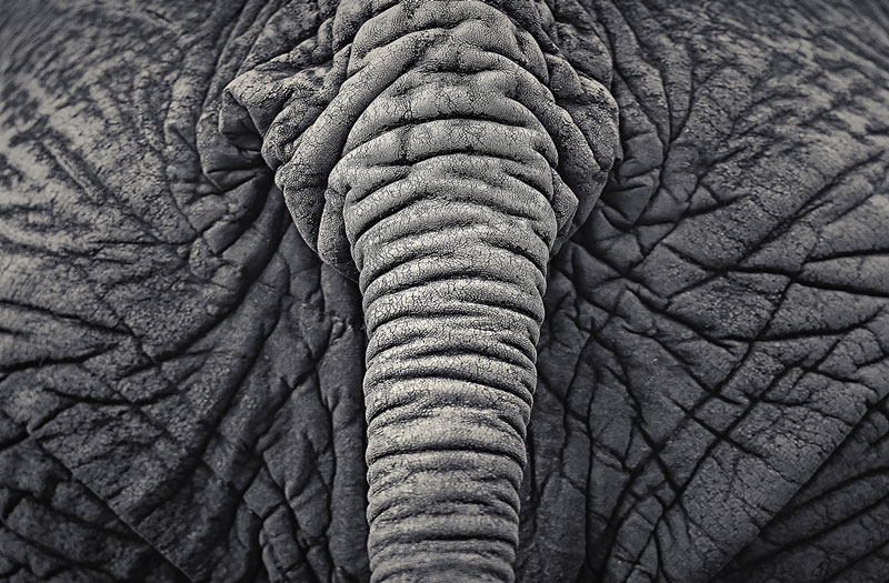 black and white animal portraits by antti viitala (5)