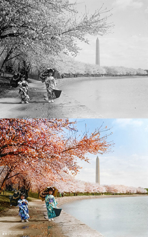 Cherry Blossoms, Washington DC, 1925 colorized by dynamichrome (2)