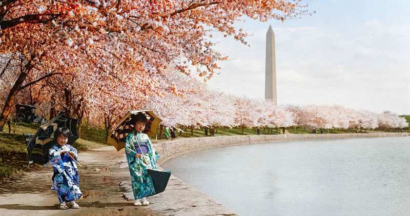 Picture of the Day: Cherry Blossoms, Washington DC,1925