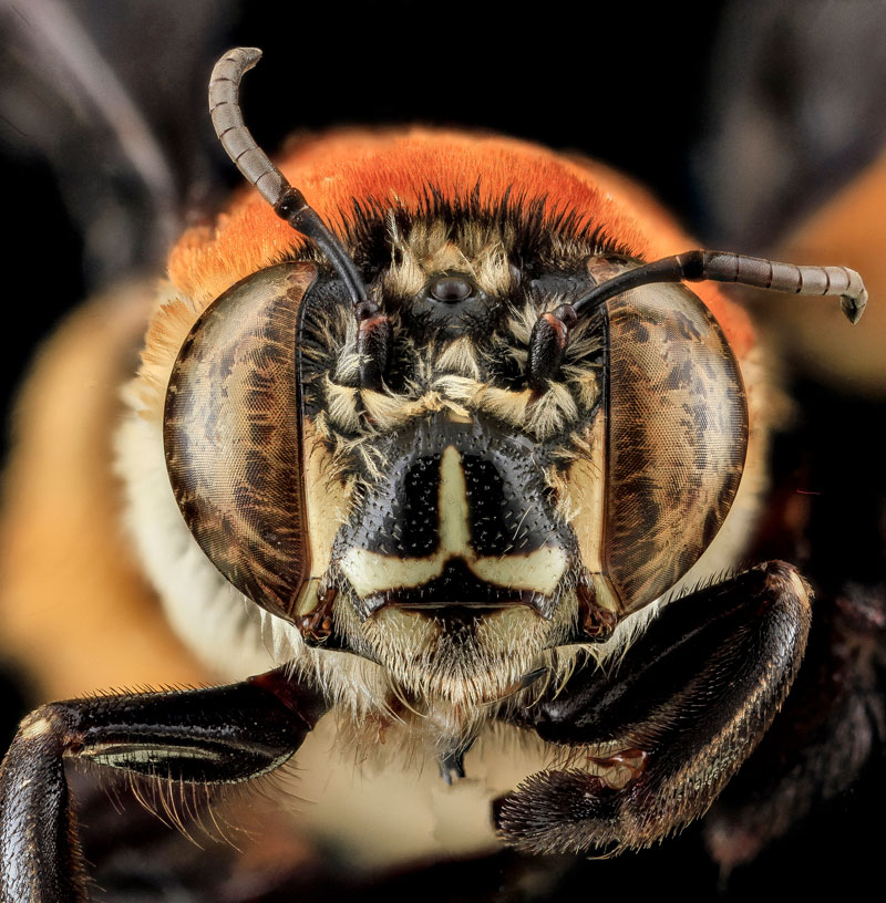 25 of the Best Close-Ups of Insect Eyes You WillSee