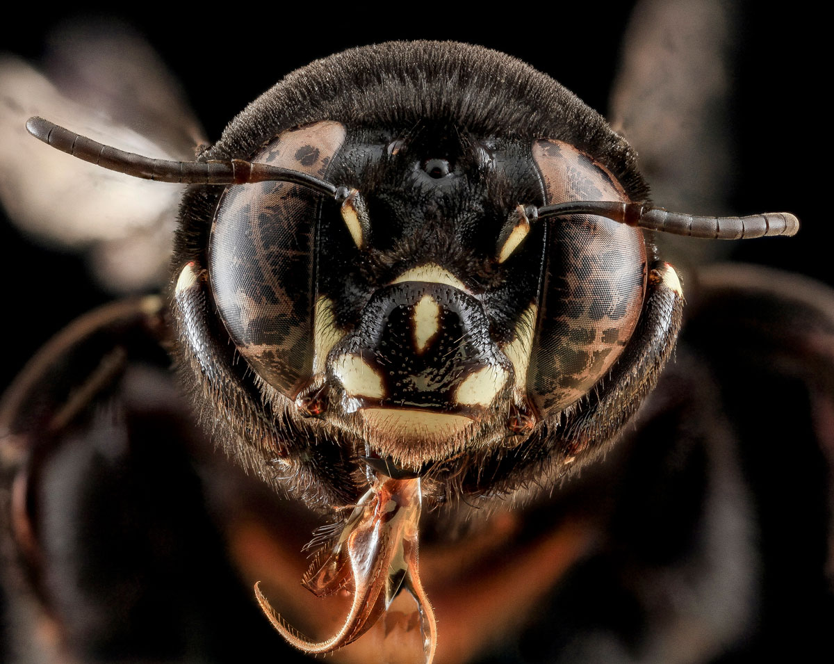 Close-Ups of Insect Eyes by usgs biml (7)