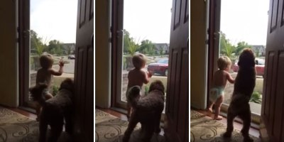 Watch This Toddler and Dog Greet Dad After a Long Day of Work