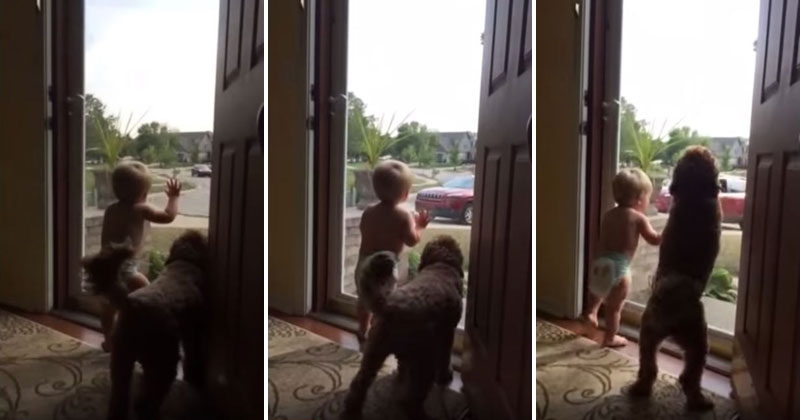 dog-and-son-wait-for-dad-to-come-home